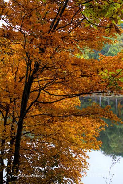 Photograph - Glowing Orange Leaves by Barbara Bowen
