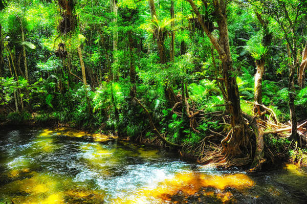 Photograph - Glowing Rainforest by Harry Spitz