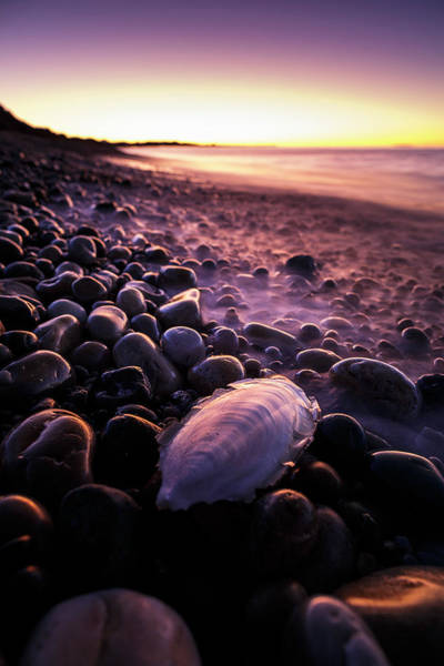 Devonport Wall Art - Photograph - Glowing Sunset Along Wet Rocks On East by Heath Holden