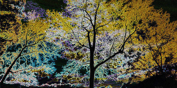 Photograph - Glowing Trees by Sheila Kay McIntyre