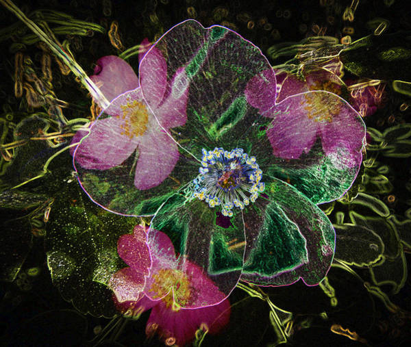 Photograph - Glowing Wild Rose by Penny Lisowski