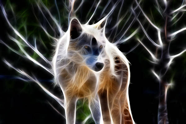Photograph - Glowing Wolf by Shane Bechler