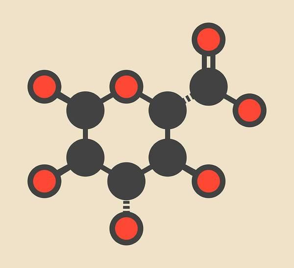 Oxidized Photograph - Glucuronic Acid Molecule by Molekuul