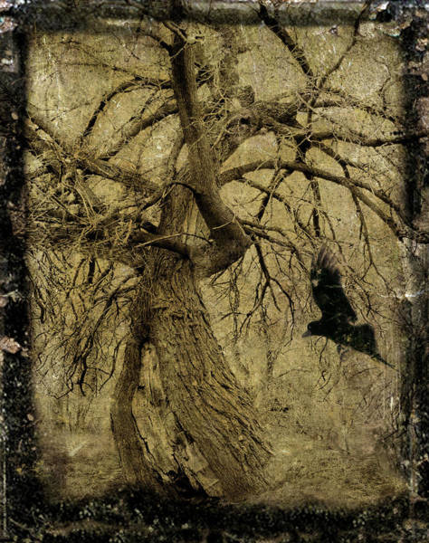 Gnarl Wall Art - Photograph - Gnarled And Twisted Tree With Crow by Gothicrow Images