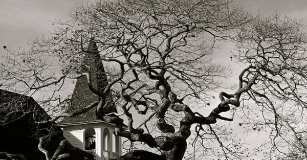 Photograph - Gnarled Tree In South Bristol by John Meader