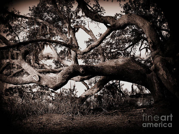 Photograph - Gnarly Limbs At The Ashley River In Charleston by Susanne Van Hulst