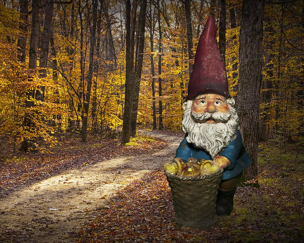 Photograph - Gnome Gathering Mushrooms Along An Autumn Forest Path by Randall Nyhof