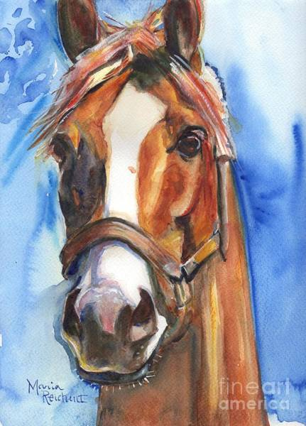 Thoroughbred Racing Wall Art - Painting - Horse Painting Of California Chrome Go Chrome by Maria Reichert