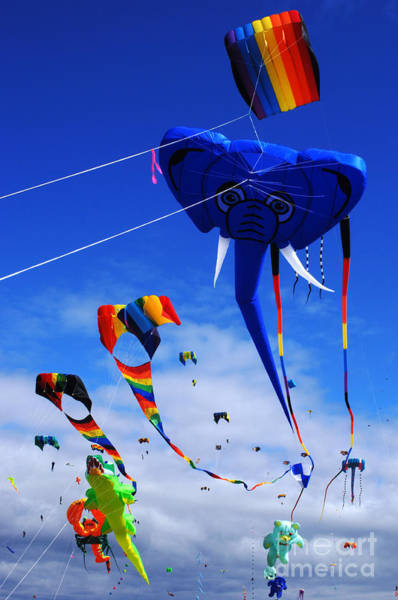 Flying A Kite Photograph - Go Fly A Kite 5 by Bob Christopher