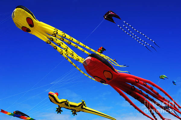 Flying A Kite Photograph - Go Fly A Kite 7 by Bob Christopher