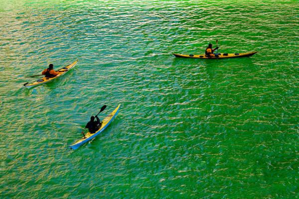 Saint Patricks Day Photograph - Go Green by Art Spectrum