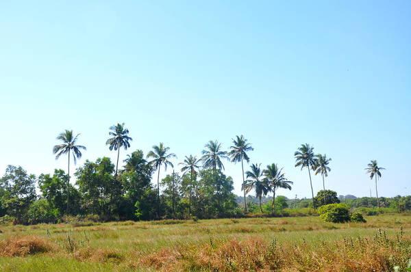 Goa Photograph - Goa Landscape by Eustaquio Santimano