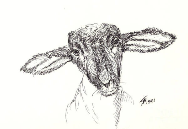 Drawing - Goat Gaze by Art By - Ti   Tolpo Bader