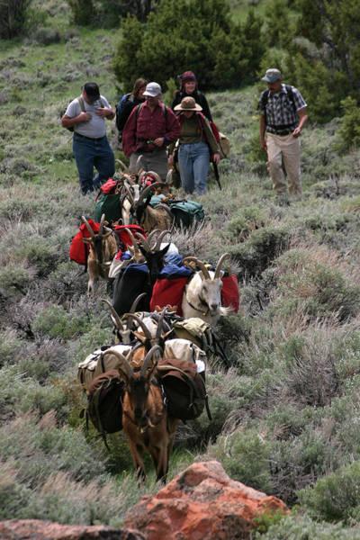 Wind River Range Wall Art - Photograph - Goat Packing In Lander, Wyoming by Karl Schatz