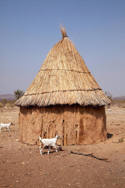 Animal Place Photograph - Goats And Hut In Himba Village, Opuwo by Jaynes Gallery
