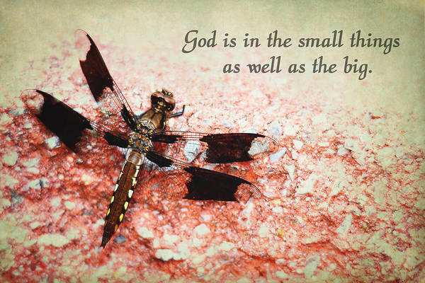 Photograph - God Is In The Small Things by Trina  Ansel