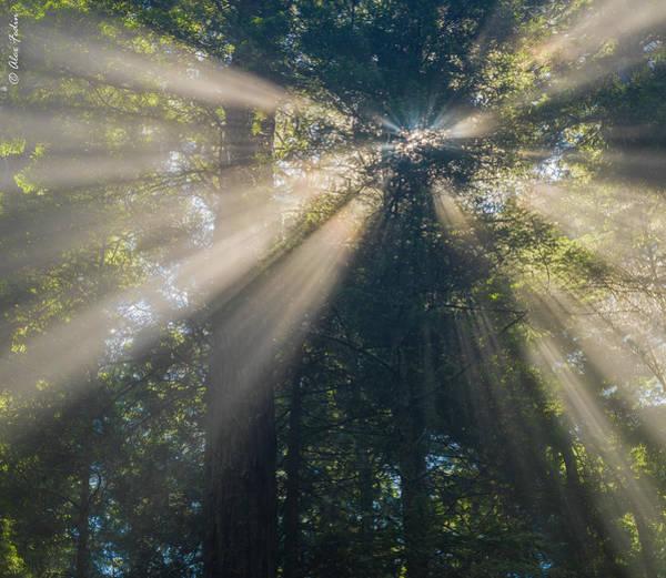 Photograph - God Rays by Alexander Fedin
