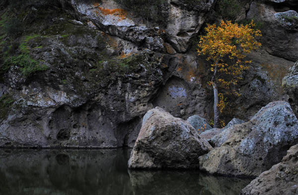 Photograph - Goddess Tree by Randal Bruck
