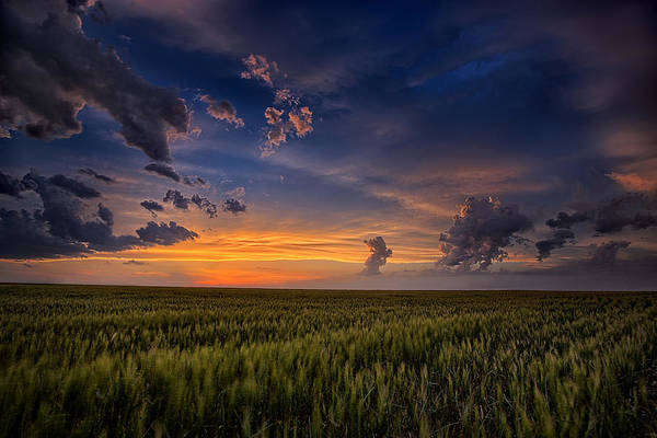 Wheat Wall Art - Photograph - God's Country by Thomas Zimmerman