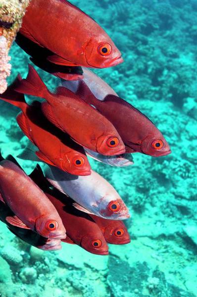 Ichthyology Wall Art - Photograph - Goggle Eyes On A Reef by Georgette Douwma