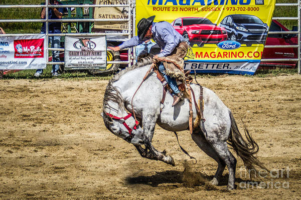 Photograph - Going For A Ride Saddle Bronc Riding Cowboy Western by Eleanor Abramson