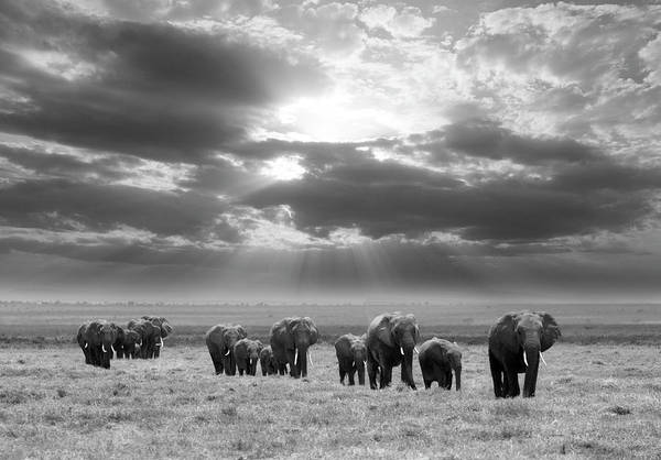 Herd Photograph - Going To Rest by Jorge Llovet