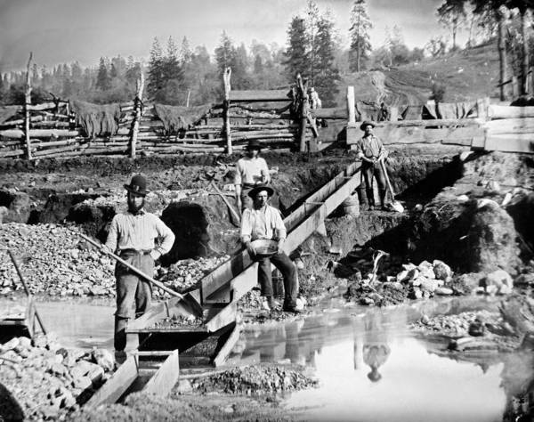 Wall Art - Photograph - Gold Miners, C1850 by Granger