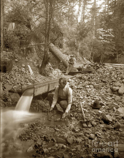 Photograph - Gold Prospector  Panning For Gold California Circa 1900 by California Views Archives Mr Pat Hathaway Archives