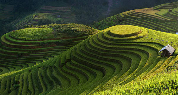 Terrace Photograph - Gold Rice Terrace In Mu Cang Chai,vietnam. by Artistname