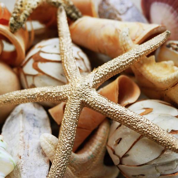 Coastal Digital Art - Gold Starfish I by Susan Bryant