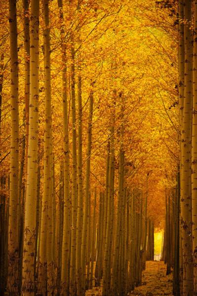 Wall Art - Photograph - Golden Alley by Dan Mihai