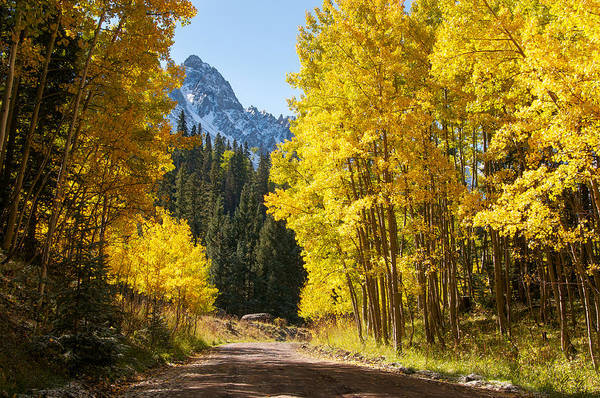Wall Art - Photograph - Golden Aspen Road by Aaron Spong
