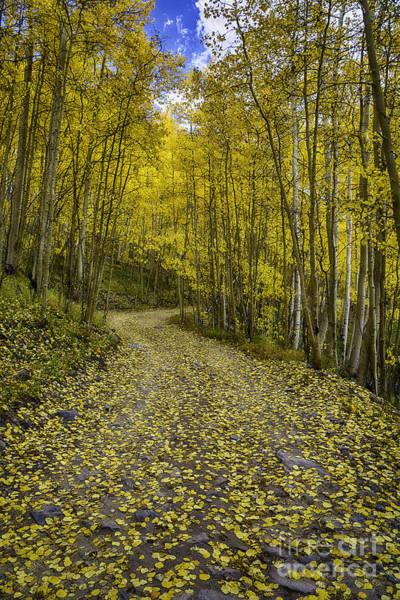 Photograph - Golden Aspen Road by Bitter Buffalo Photography