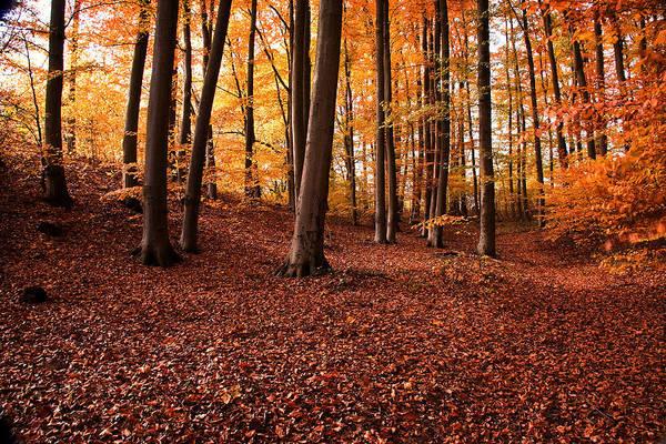 Photograph - Golden Autumn by Danuta Antas Wozniewska