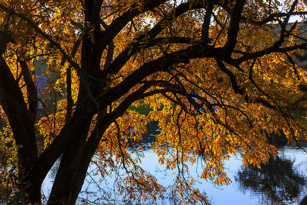 Photograph - Golden Autumn Leaves by Garry Gay