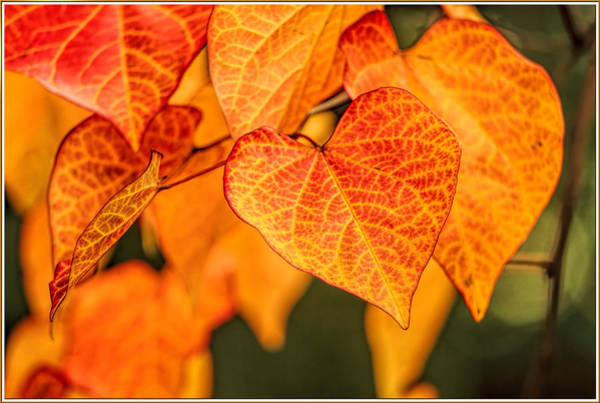 Wall Art - Photograph - Golden Autumn Leaves by Geraldine Scull