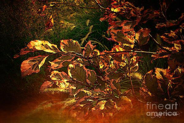Wall Art - Photograph - Golden Autumn Leaves Photo by Heinz G Mielke
