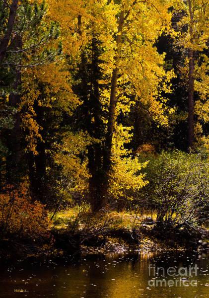Truckee River Photograph - Golden Autumn by Mitch Shindelbower