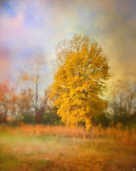 Photograph - Golden Autumn Splendor - Fall Landscape by Jai Johnson