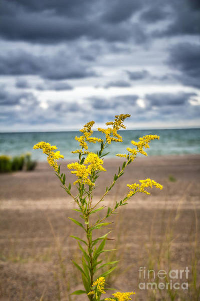 Photograph - Golden Beach by Jim McCain
