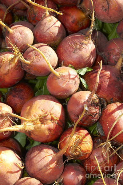 Beet Wall Art - Photograph - Golden Beets by Tony Cordoza