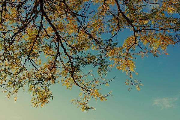 Photograph - Golden Branches by Patricia Strand