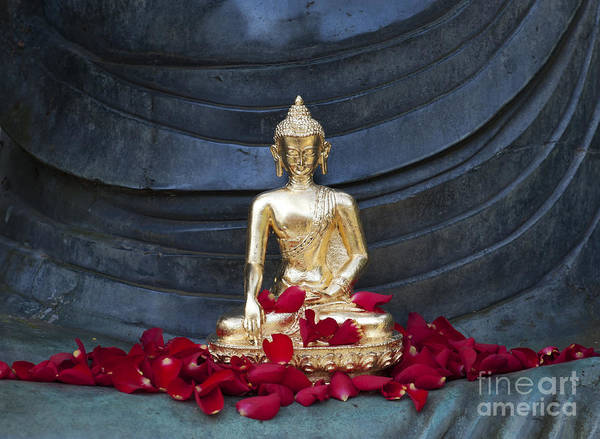 Wall Art - Photograph - Golden Buddha by Tim Gainey