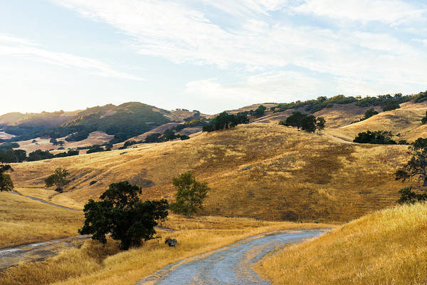 Photograph - Golden California Hills by Priya Ghose