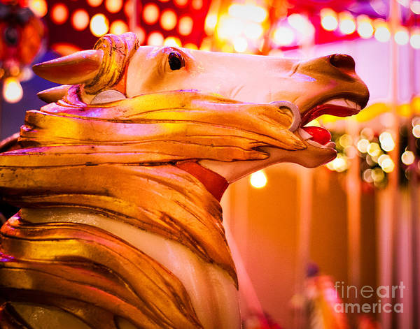 Steed Photograph - Golden Carousel Horse by Sonja Quintero