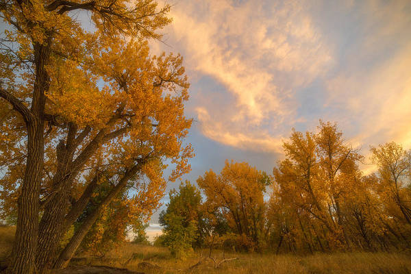 Photograph - Golden Chatfield by Darren  White
