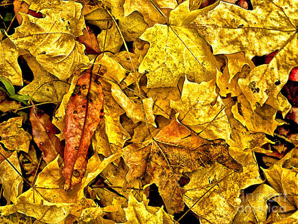 Golden Colors Of Fall Art Print