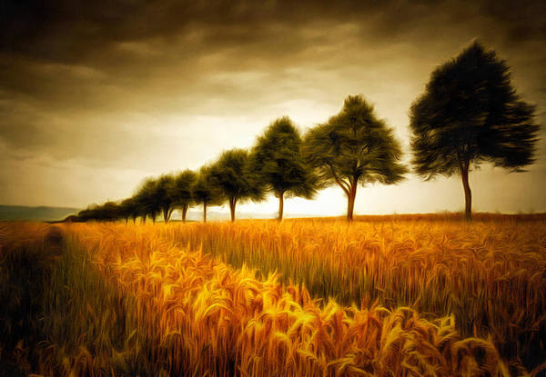 Painting - Golden Cornfield With Row Of Trees Painting by Matthias Hauser