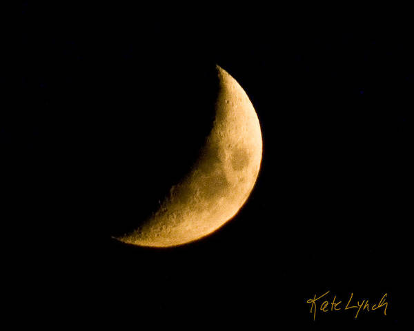 Photograph - Golden Crescent by Kate Lynch