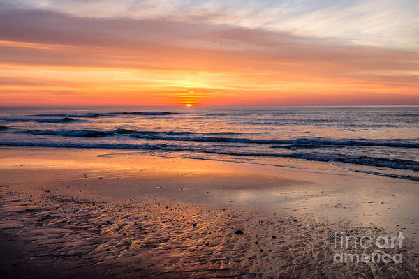 Photograph - Golden Detail - Coast Guard Beach by Susan Cole Kelly